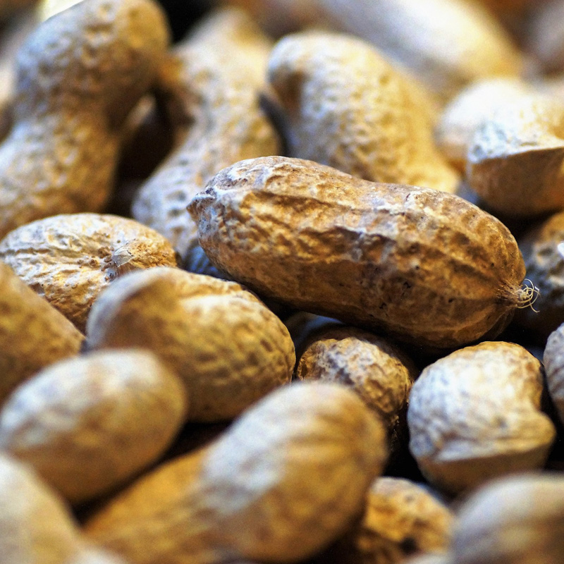 Alergénicos e Intolerâncias Alimentares